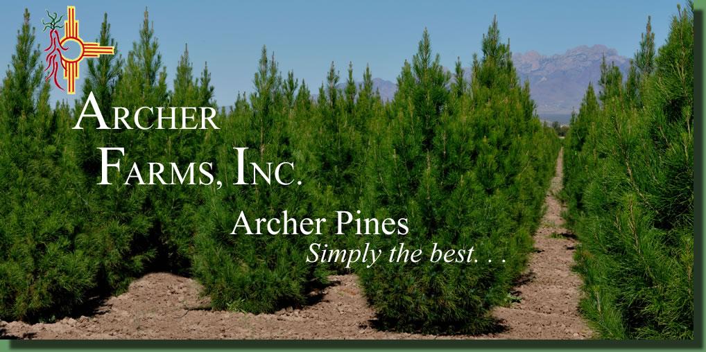 Archer farms pinus eldarica eldarica afghan pine and pecan pictures